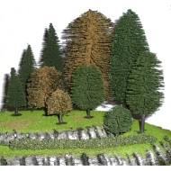 Tasma Trees